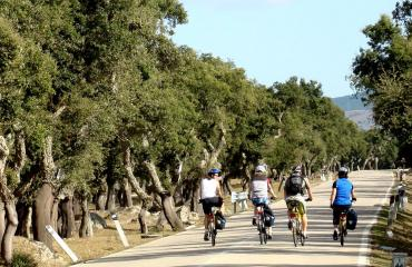Bike tour Sardinia: Gallura area, cycling among the cork trees