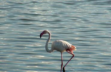 Hiking Sardinia:  Flamingo