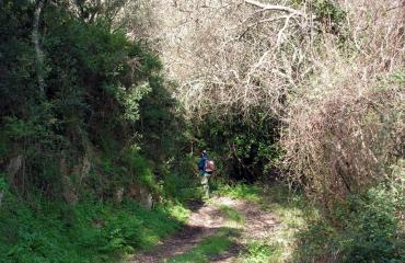 Hiking Sardinia: oak forest in Santu Lussurgiu